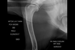 ECHARREN_ANDRES_ARTZAI_LA__SHARA_Esqueleto-Grandes-25-45-kg-Neck-VD-16_09_2019-19_00_47-469